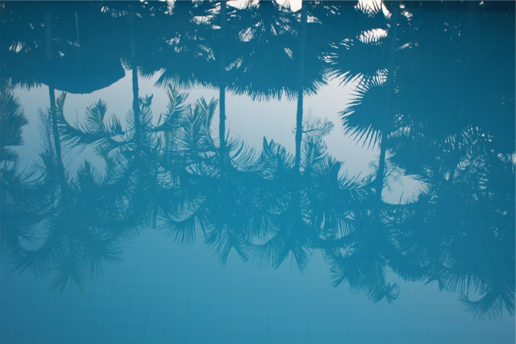 Reflection of palms in pool water